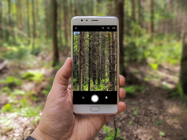 Mobile phone in the forest